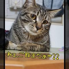キジトラ/愛猫/ペット 物思いにふけるライライ😊❤️