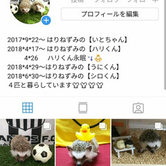 Instagram/ハリネズミ 2018*7*31  さっきの消えてしま…