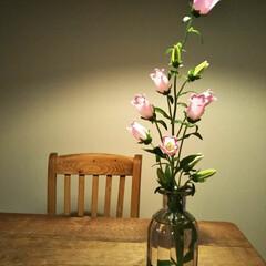 穏やかな暮らし/丁寧な暮らし/お花の暮らし/和室インテリア/和室/インテリア雑貨/... ちょっとお花があるだけでインテリアがはえ…