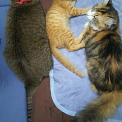 仲良し/保護猫/ねこ/ペット 仲良し💕