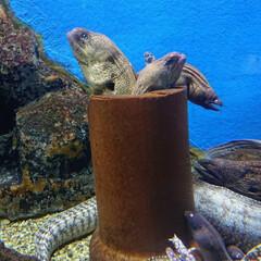 海の生き物/水族館/おでかけ/暮らし/旅行/LIMIAおでかけ部 ウツボがフライドポテトみたいに🍟入ってる…