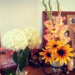 花/いい香り/ご近所さん/お花のある生活/住まい/暮らし/... ちょっと前~~ご近所さんから頂いたグラジ…