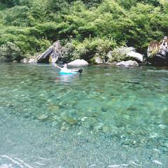 お出かけ/夏休み/川遊び/令和の一枚/風景/暮らし/... 川遊び~🌞綺麗な川で水も冷たくて……とっ…