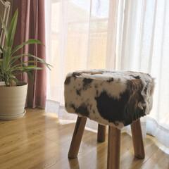 Amazon/牛柄/スツール/家具/住まい/建築 牛柄スツール