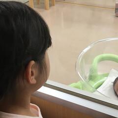 誕生/孫/子ども チビチビ娘、今日おばちゃんになりました。…