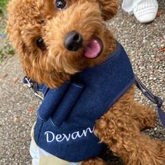 犬との生活/犬との暮らし/トイプー/トイプードル/犬 愛犬ピノとお散歩。名古屋市港区にあるメイ…