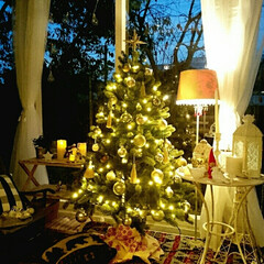 サンルーム/クリスマスツリー