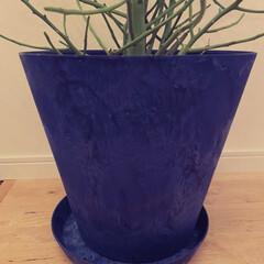 アートストーン/植木鉢/観葉植物/観葉植物のある暮らし/グリーン/モルタル風 アートストーン の植木鉢。水のやりすぎ、…