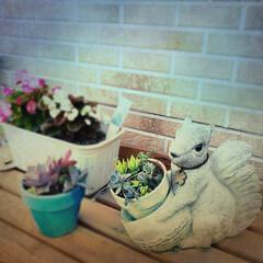 室外機カバー/庭/多肉植物/リス/花に囲まれたい/ガーデニング/... 7、8年前の誕生日プレゼントでもらったリ…