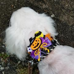 愛犬/散歩 今日の散歩🐶 我が家に訪問者?!フェンス…