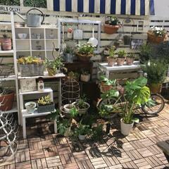 多肉植物/リメイク/100均リメイク/ワイン箱/自転車リメイク/賃貸DIY/... 賃貸の小さな庭でガーデニングを楽しんでい…