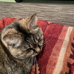 猫の日/LIMIAにゃんこ同好会/LIMIAぺット同好会 ニャンコの日🐱🐾 我が家のニャンズ💕 こ…(2枚目)