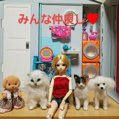 ペット雑貨/おもちゃ/ドールハウス/羊毛フェルト/ハンドメイド ドールハウスのお友達(*^^*)