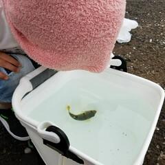 おでかけ/釣り 水族館に行きたがっていた息子… 夏休みだ…