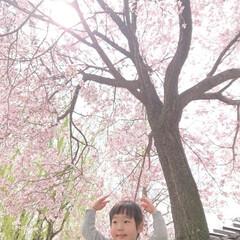 春のフォト投稿キャンペーン/LIMIAおでかけ部/おでかけ/うちの子ベストショット 桜の木の下で📷✨(1枚目)