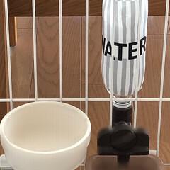 給水ボトル/犬/ケージ/ペットボトルアレンジ/セリア/100均/... ハミコさん用の給水ボトルをデコレーション…(1枚目)