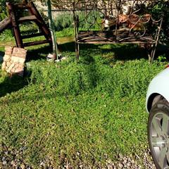 庭/緑化/グランドカバー/クラピア/雑草対策/ガーデニング 芝生のかわりに採用したクラピア。 土がな…