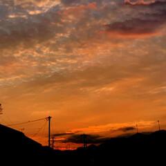 ウォーキング/夕景/ガーデニング/夏の花/雨季ウキフォト投稿キャンペーン/令和の一枚/... こんばんは(*^▽^*)ノ 庭の夏の花が…(5枚目)