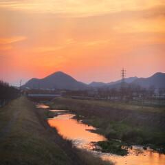 ウォーキング/シラサギ/夕日 久しぶりに風もなく穏やかな夕暮れだったの…(1枚目)