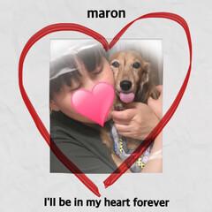いつも見守ってくれてありがとう/命日/あだ名はマーちゃん/マロン  #みにちゅあだっくす  #レッド  #…