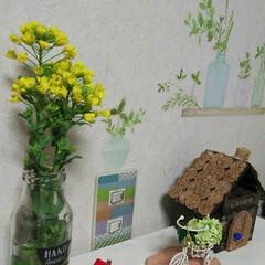 菜の花/ナチュラルキッチン/ハンドメイド/雑貨/100均/小さい春 近所に農家さんで、無人の野菜販売してる所…