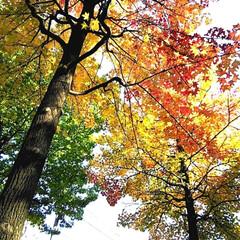 紅葉/秋/風景 近所で、紅葉がとてもきれいなスポットです…