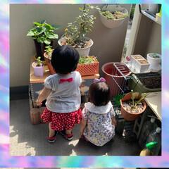 可愛い後ろ姿/お花とおしゃべり/DIY/ベランダ/暮らし/ベランダガーデン/... 母の日に、長女と次女の家族が、遊びに来て…(1枚目)