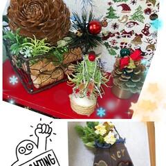 リメイク雑貨/ハンドメイド/ダイソー/セリア/クリスマス シダーローズの大きな実を見つけたので、根…