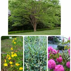 散歩道/公園 青葉が眩しい季節ですね。色んなお花も咲い…