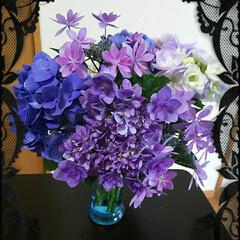 4種類の紫陽花/紫陽花「ダンスパーティー」/雨季ウキフォト投稿キャンペーン/令和の一枚/暮らし 友人宅のお庭に植えられている、紫陽花4種…