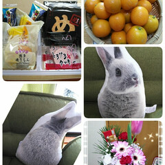 金柑/九州土産/うさぎのクッション/プレゼント/あけおめ/冬 還暦祝い、娘からはお花を、妹のコムギちゃ…