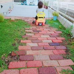 クラピア/小道/レンガ/DIY/住まい