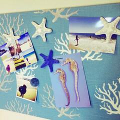 sea/マグネット/starfish/ハンドメイド/マグネットボード
