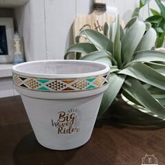 セリア/ボディーシール/鉢リメイク/かっこかわいい/簡単に/バンドメイド 植木鉢をペイントして、セリアのボディーシ…