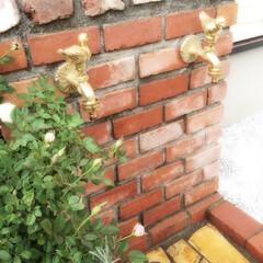 ガーデニング アンティークレンガを使った立水栓です。