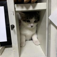 キッチンカウンター/子猫/セリア/100均/DIY/キッチン収納/... カウンターキッチンの隙間からシンクのとこ…