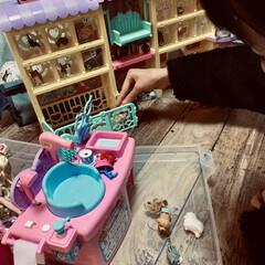 ペットショップ/リカちゃん/プレゼント/2018/フォロー大歓迎/ペット/... クリスマスプレゼントは リカちゃんのペッ…(1枚目)