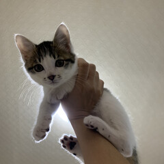 イタズラ/ヤンチャ/猫/子猫/暮らし/フォロー大歓迎 イタズラばかりする子猫  台所へ侵入して…