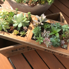 挿し木/ガーデニング/多肉植物/グリーン/DIY/雑貨/... 多肉植物の挿し木も出来るガーデンBox …