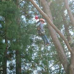 イベント/昭和大仏/ロープ登り/令和の一枚/フォロー大歓迎/おでかけワンショット イベントに行ったら木のロープ登りをやって…