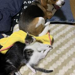 ビーグル/子猫/老犬/暮らし/フォロー大歓迎 動物達が集まって暖とってます  何だよー…(1枚目)