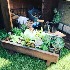 サビ加工/ワイン箱/寄せ植え/多肉植物/グリーン/DIY/... 多肉植物の挿し木をプランターに移しました…