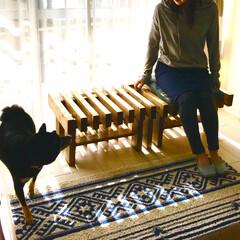 ベンチ/縁側/収納/棚/SPF 掃き出し窓の居心地の良さを飼い犬だけに与…