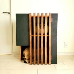 キャットハウス/犬小屋/猫家具/猫/犬/ペット/... 新作の犬猫ハウス、実際に作ってみました。…