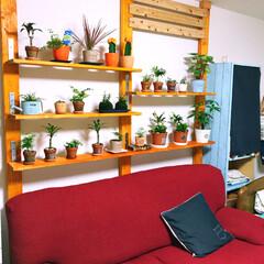 ディアウォール ディアウォールで植物棚を作製