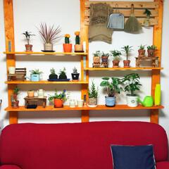 ソファ/クッション/DIY/緑のある暮し/ディアウォール/生活雑貨 癒しの植物棚