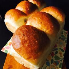 手ごねパン/手作りパン #湯種食パン  ラムレーズン入りバージョ…