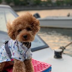 一足早い夏/溺愛/ベストショット/甚平/トイプードル/海/... 一足早い夏をテーマに 船の上で写真を撮っ…