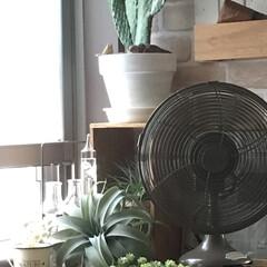 万歳サボテン/ガリレオ温度計/ドライフラー/フェイクグリーン/扇風機/グリーン/... 今日は… 朝からお庭いじりの続き 放った…(1枚目)