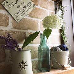 窓辺/リメ缶/ラベンダー/アナベル/ディスプレイ/グリーン/... 雨上がりの今朝 庭から…1番最初に咲き出…